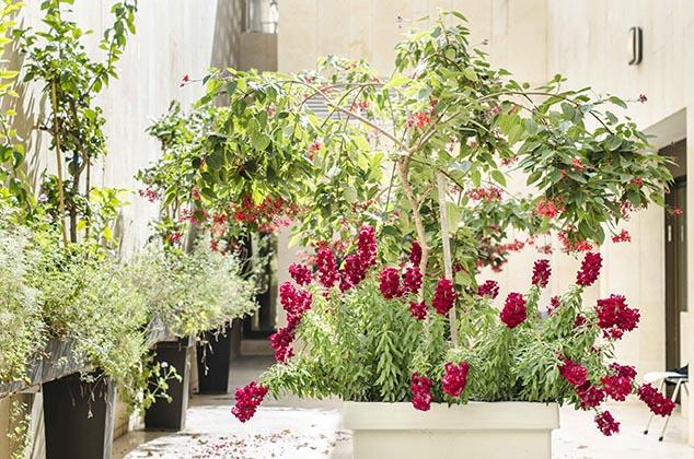 Nomi Weingrod | Creative Gardening | Public Gardens | Lemon Espalier and Herb Garden