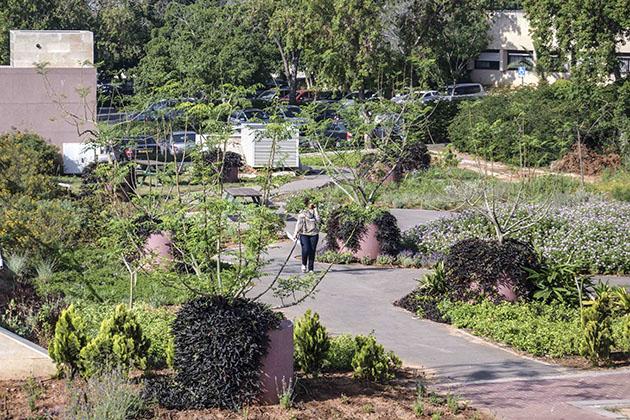 Nomi Weingrod | Creative Gardening | Public Gardens | Roof Top Garden of Parking Lot-Rehabilitation Hospital